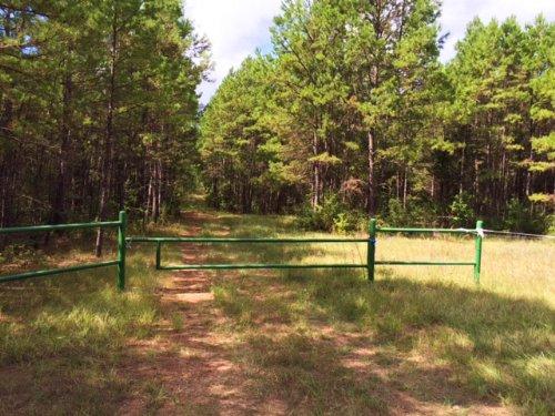 94 Acres Fm 323 : Alderbranch : Anderson County : Texas