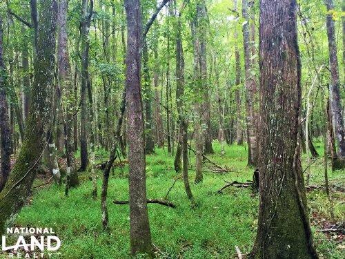 Turbeville Hunting Land : Turbeville : Clarendon County : South Carolina