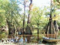 Jefferies Creek Recreational Land : Pamplico : Florence County : South Carolina