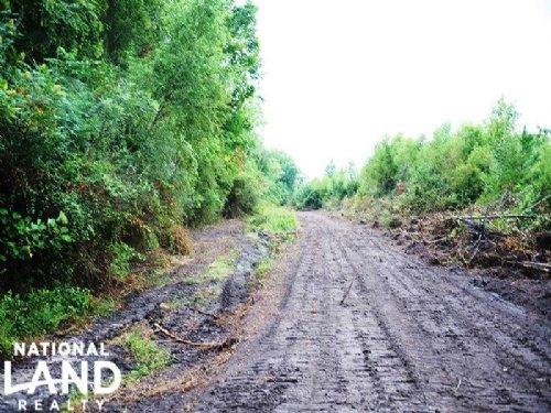 Bennettsville Hunting & Timber Inve : Bennettsville : Marlboro County : South Carolina