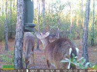 16.63 Acres For Hunting : Perry : Taylor County : Florida