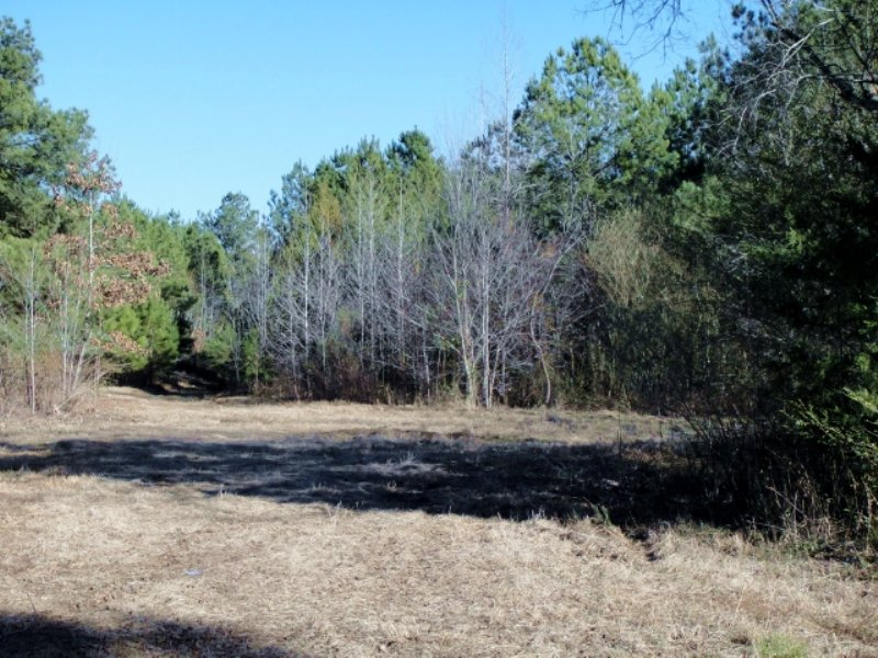 19.5 Acre Hunting Tract / Homesite : Canton : Madison County : Mississippi