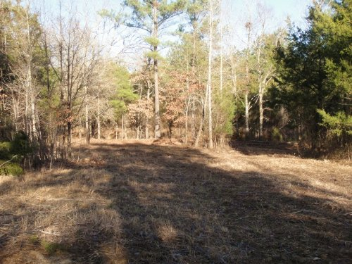 24.5 Acre Hunting Tract / Homesite : Canton : Madison County : Mississippi