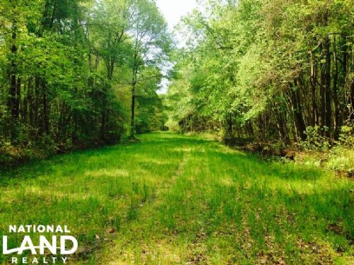 Hunting Camp With Lodge : Newington : Screven County : Georgia