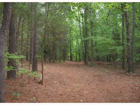 Park-like Land To Build On : Pittsboro : Chatham County : North Carolina