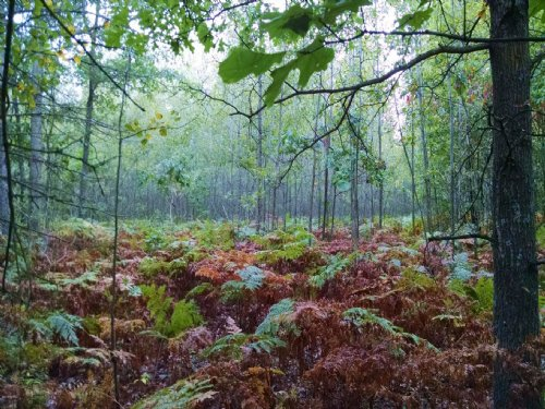 Rolling And Wooded 30 Acres : Hesperia : Oceana County : Michigan