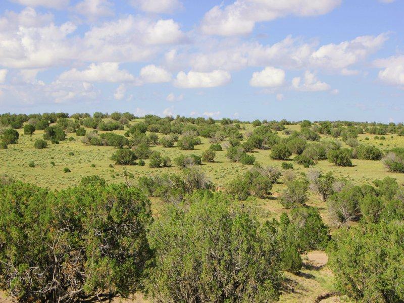 38 Acre Northern Arizona Ranch : St. Johns : Apache County : Arizona