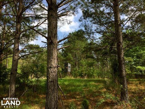 The Sullivan Creek Tract : Sardis : Lowndes County : Alabama