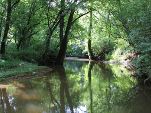 195 Acres For Sale : Trion : Walker County : Georgia