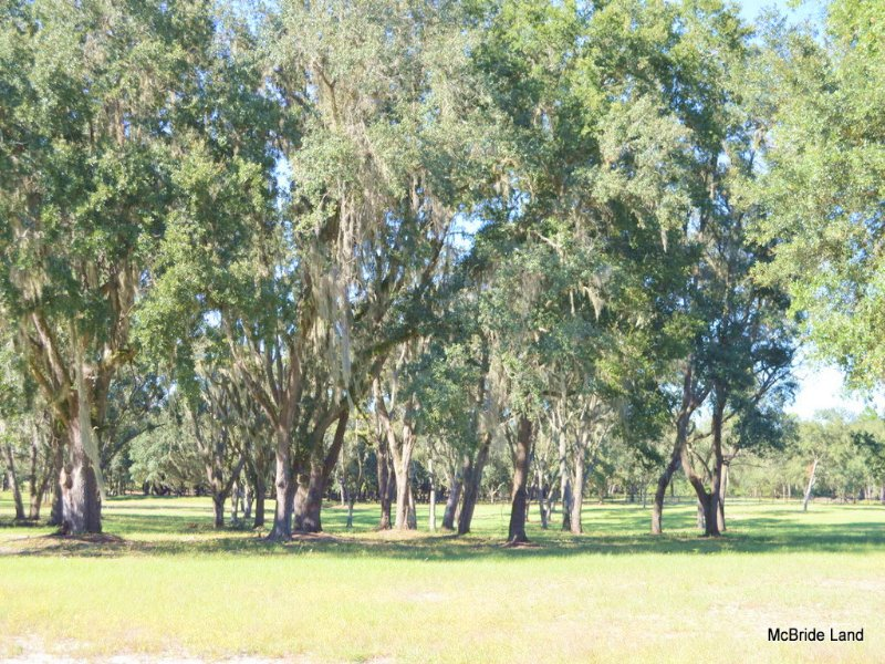 Thunder Ranch 17.55 Acres : Anthony : Marion County : Florida