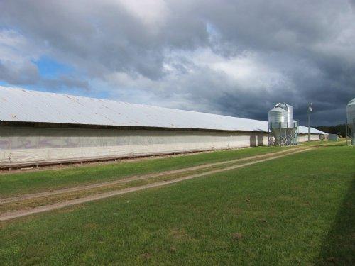 Cage Free Egg Operation : Hampton : Bradford County : Florida