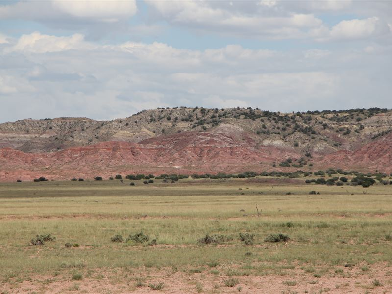 Secluded Northern Az Ranch : Saint Johns : Apache County : Arizona