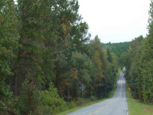 Pine, Hardwood Timberland, Creek : Butler : Taylor County : Georgia