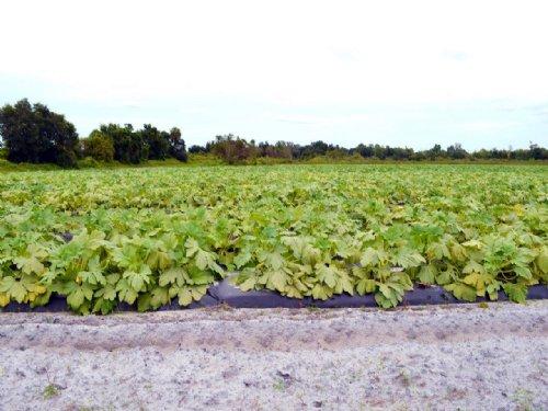 Moffitt Road Organic Farm : Zolfo Springs : Hardee County : Florida