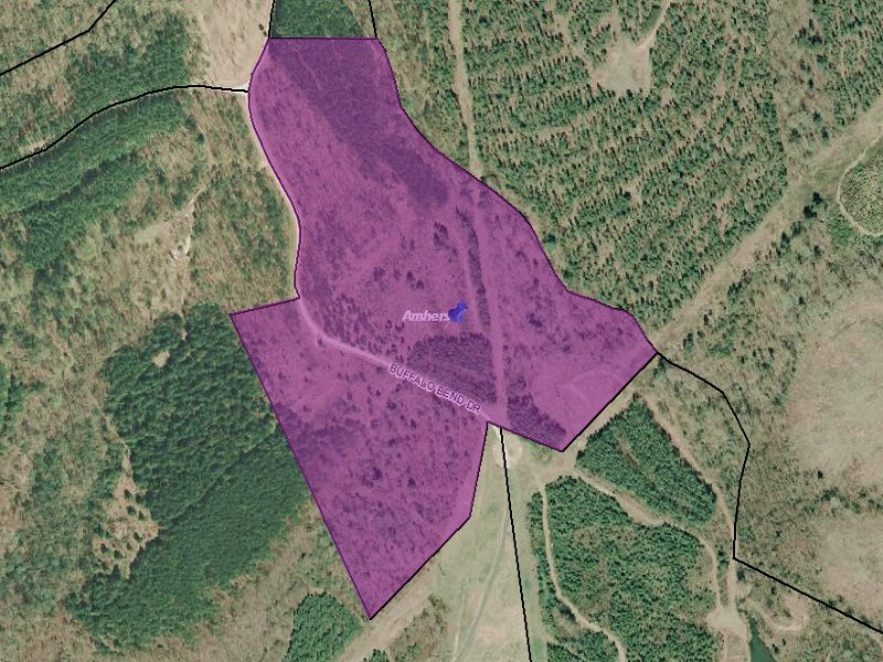 25.36 Wooded Acres : Amherst : Amherst County : Virginia