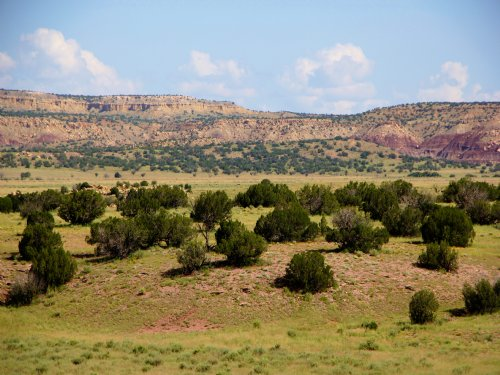 140 Acre Wilderness Ranch : Datil : Catron County : New Mexico