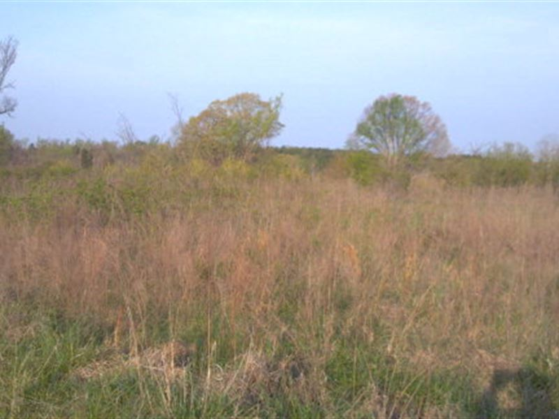 Large Acreage Tract : Halifax : Halifax County : Virginia