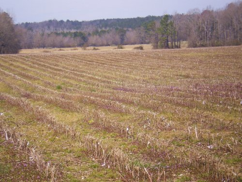 Maddox Family Farms : Tallassee : Elmore County : Alabama