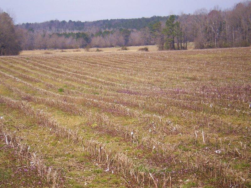 Maddox Family Farms : Tallassee : Elmore County : Alabama