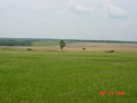 2,439 Acres : Butler : Taylor County : Georgia
