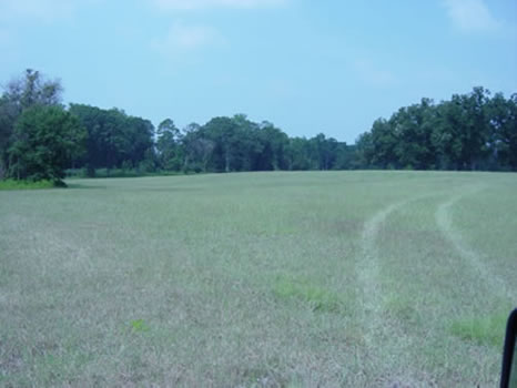 31.8 Acres : Tifton : Tift County : Georgia