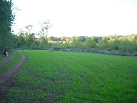 100 to 257 Acres : Butler : Taylor County : Georgia
