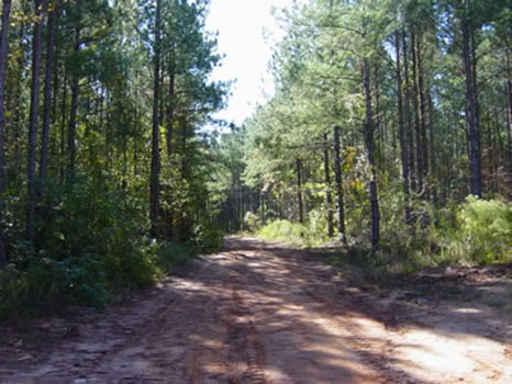 695 Acres : Sparta : Hancock County : Georgia